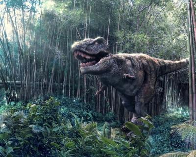 Образец, тираннозавр, tyrannosaurus, сомозг